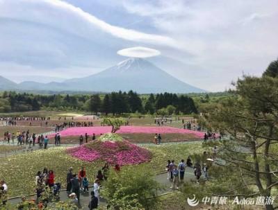 参观富士芝樱园,赏最美富士山