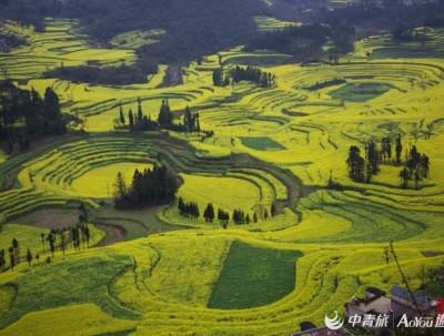 我与多彩云南的约会《三》 罗平油菜花峰林中的童话世界