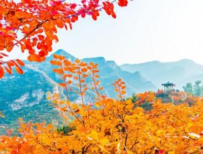 又是一年红叶季,别再去北京香山看人了