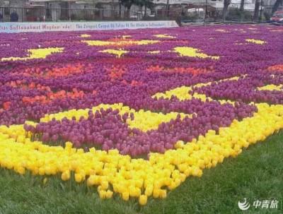 土耳其-郁金香节