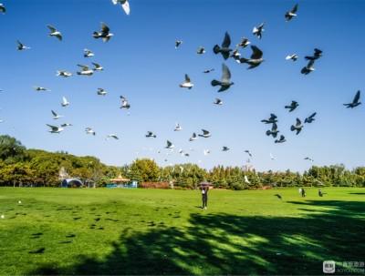 在之禾,草坪比4个足球场大,还有梅花鹿出没的度假胜地