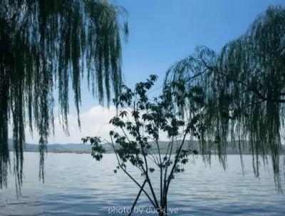 来了不想走 西子湖畔柳浪垂涛,南山路悠闲时光,宋城穿...