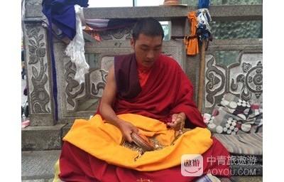 西藏之行---虔诚的朝拜者