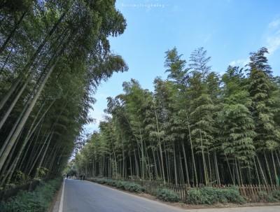 一山一水一泉,星空下的竹尖温泉,竹海森林里的天然氧吧