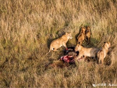 肯尼亚的食肉动物篇