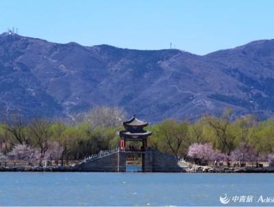 非常时期去颐和园西堤看山桃花