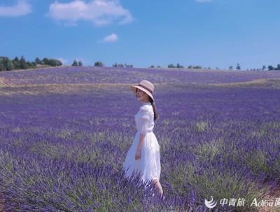 旅行|美丽又危险,南法赏花你怕了么?