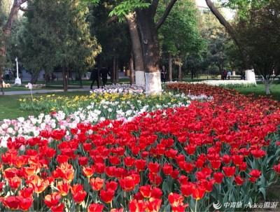 姹紫嫣红斗芳菲——北京中山公园
