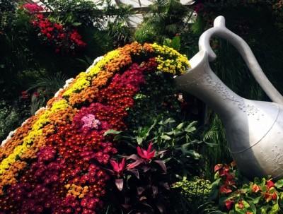 农业嘉年华---食物和植物的艺术感