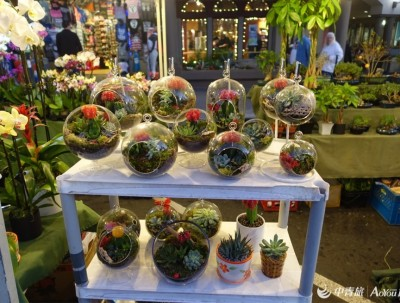 逛美国夜市#night market in hontington beach downtown
