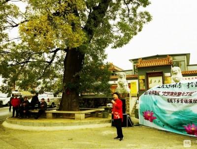 田仙峪村:白墙绿瓦、整洁干净的小山村