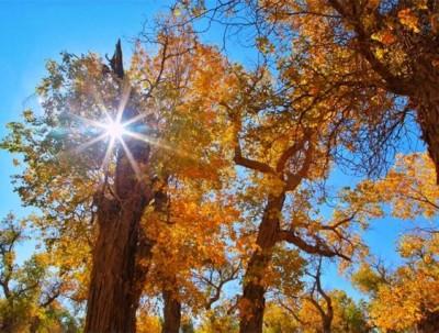 内蒙古大漠胡杨林, 追寻中国最美的秋色,