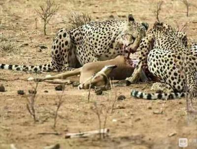 肯尼亚10天游览