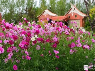 千亩花海扮靓塞上古城,西北超大规模花博会将绚烂绽放37天
