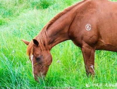 徒步、自行车、自驾out,在最野的内蒙草原骑最野的马才最in