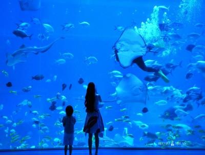七夕,牵手探秘海底世界,走进九龙湖畔异域风情!
