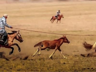 锡林浩特大草原等你来拍马