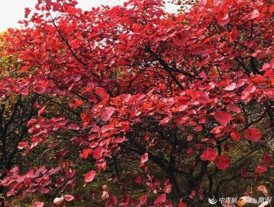 北京房山坡峰岭红叶正当时