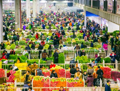 中国最大的花卉市场,鲜花白菜价,卖花像卖菜