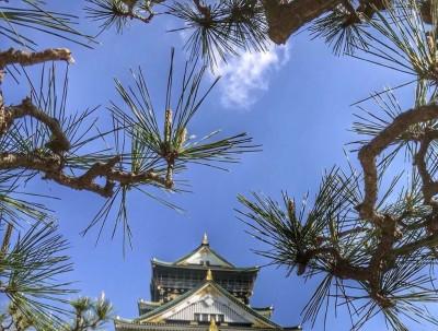 樱花盛开时让我们相约日本