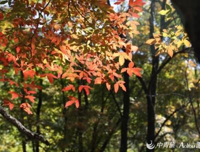 秋已至,撷一叶光阴藏心间