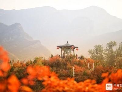 京郊的枫叶红了,最佳观赏地点在这里,比香山更美!